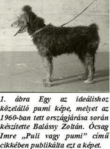 Pumi 1960-ban