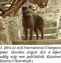 Az első International Champion pumi