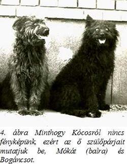 Móka és Bogáncs, pumi