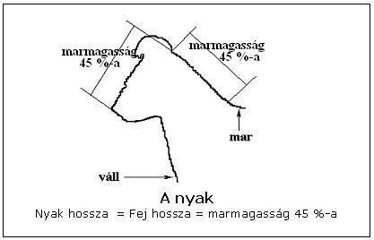 A pumi nyaka - arányok