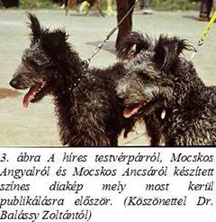 Mocskos Angyal és Mocskos Ancsa, pumi